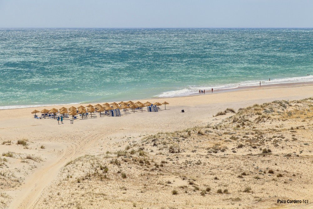 Beach of La Fontanilla, in Conil de la Frontera, Cadiz