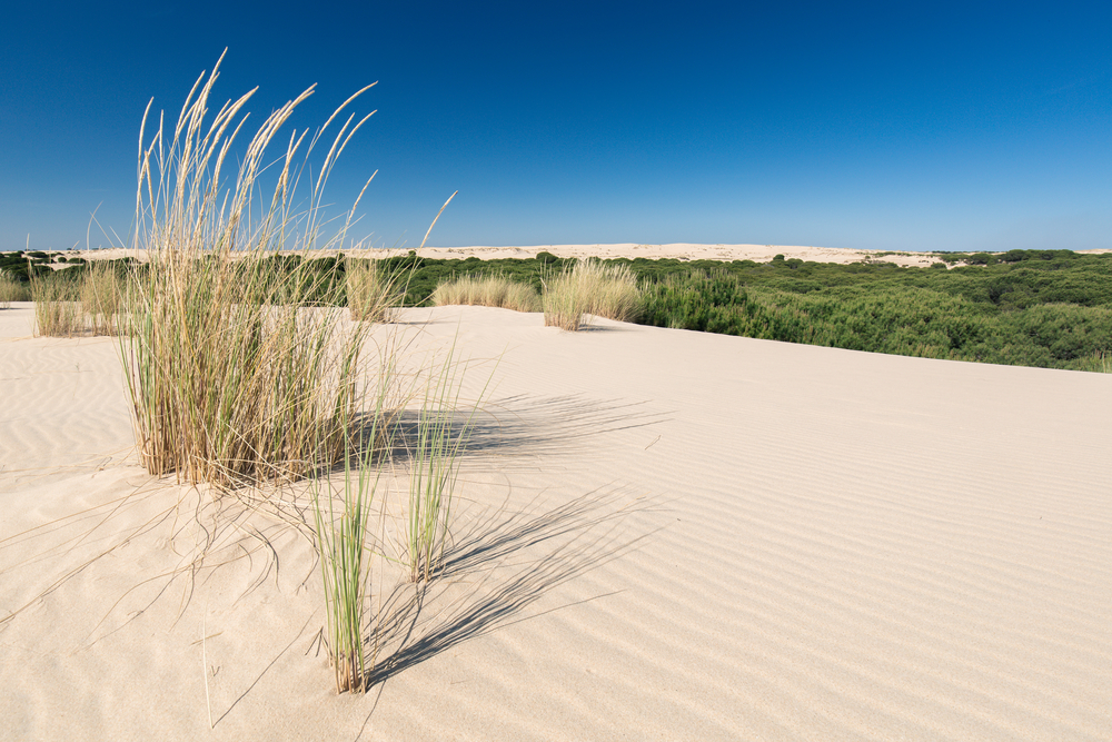Dunes path in Doñana