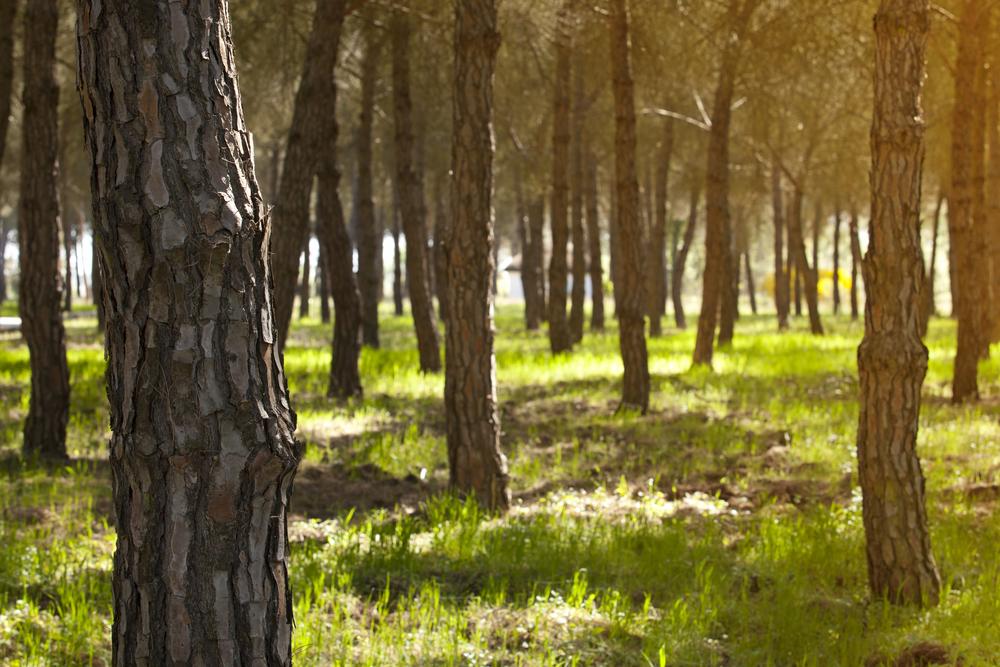 Bosque en Doñana