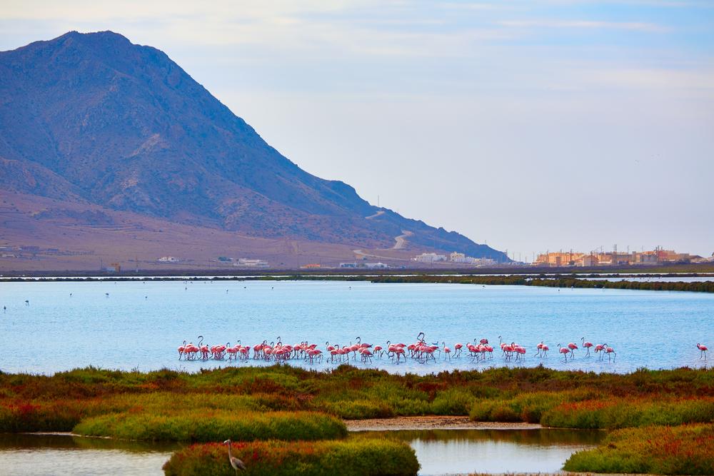 Parque natural de Cabo de Gata-Níjar en Almería (Las Salinas)