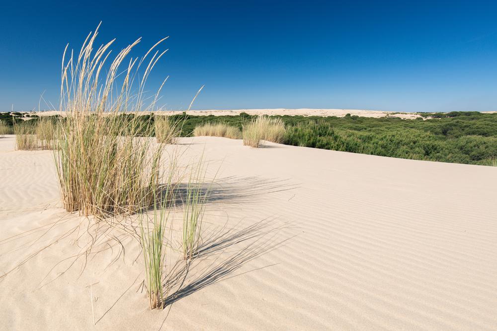 Sentier des dunes à Doñana