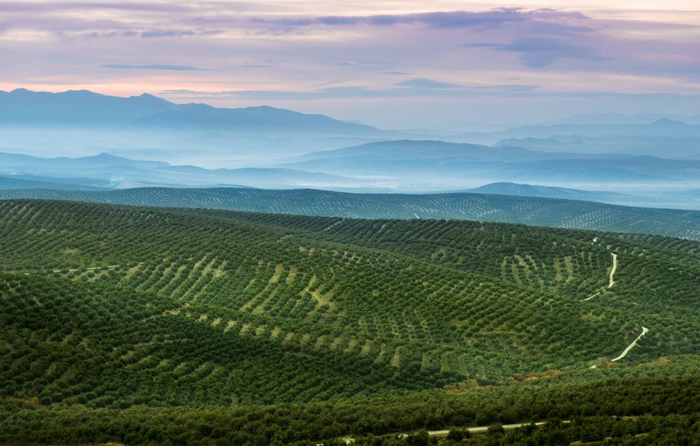 Olivenhöfe von Jaen