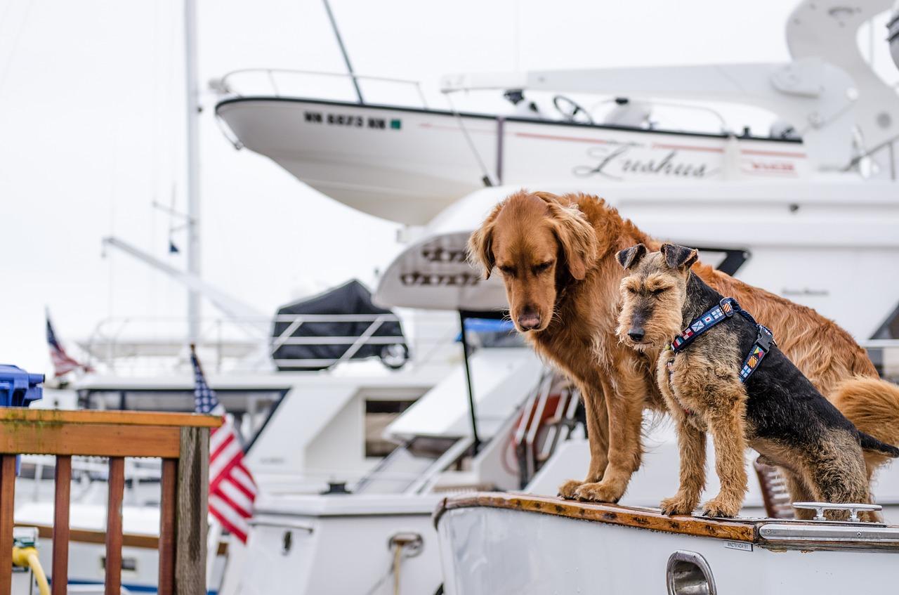 Honden reizen