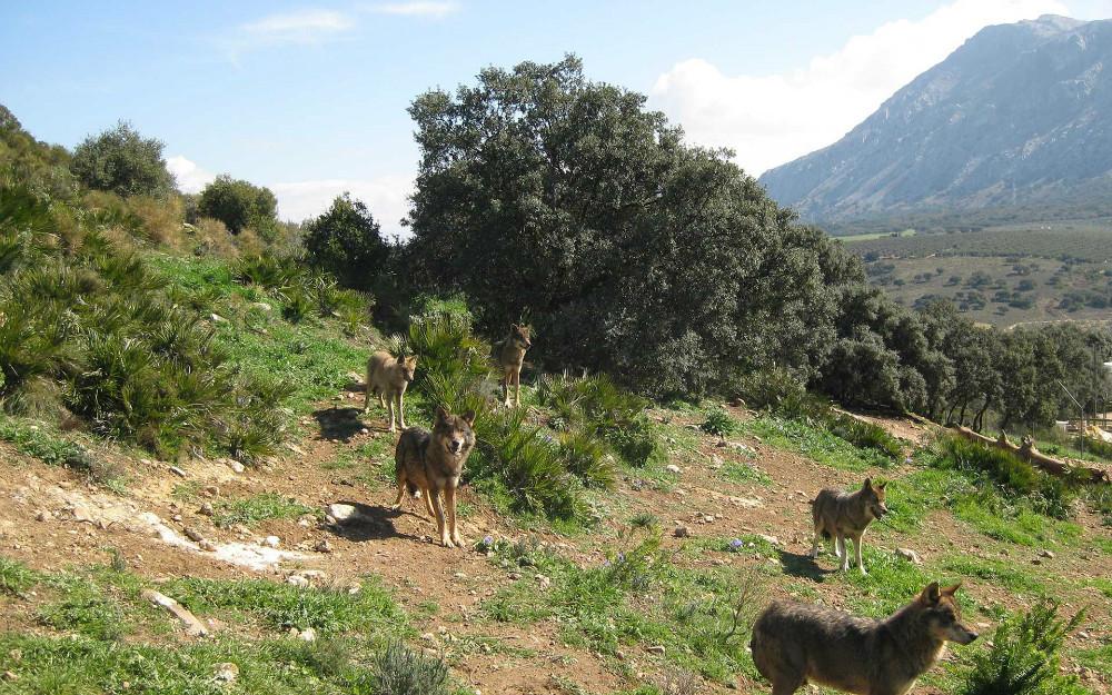 Lobo Park von Antequera