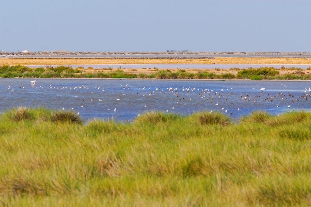 Une marécage dans la parc national de Doñana - Andalousie en 14 jours