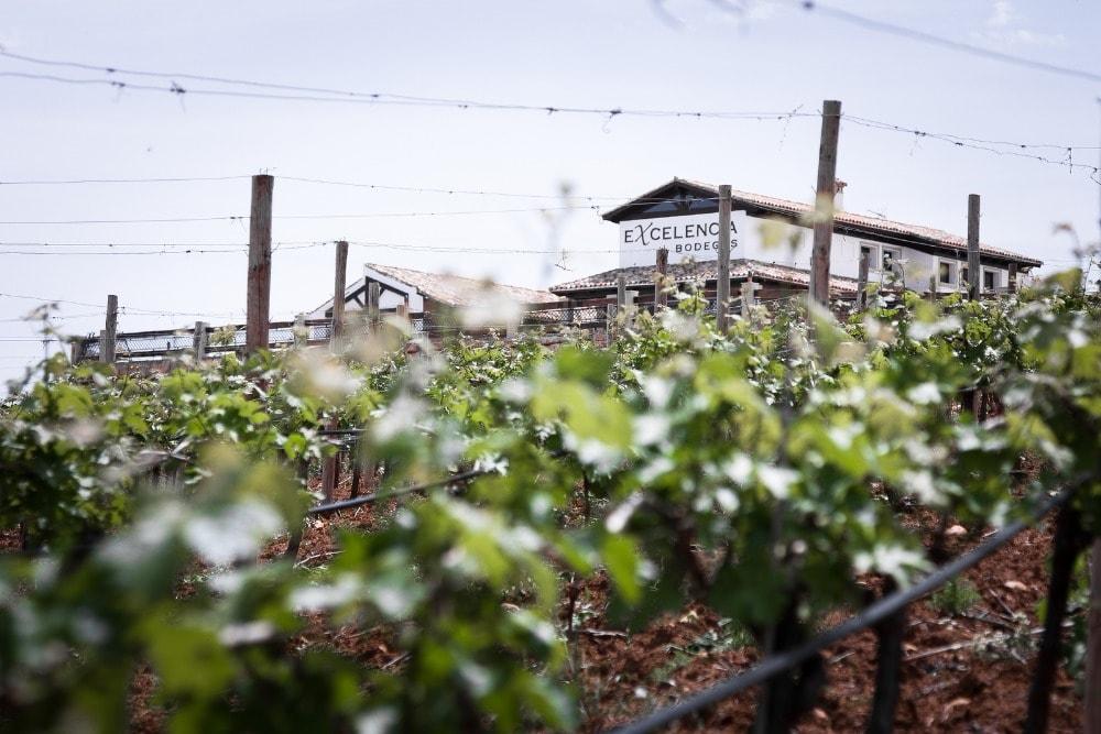 Bodegas Excelencia winery in Ronda