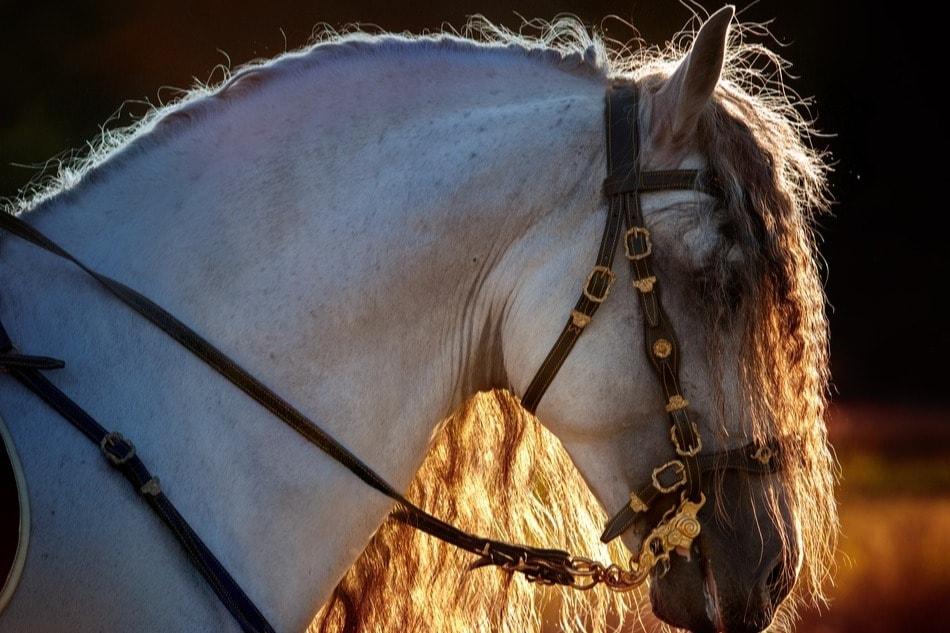 Pferd während der Feria del Caballo in Jerez