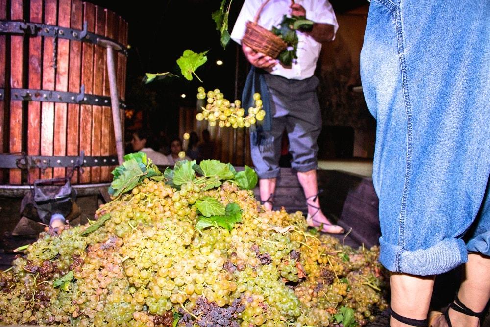 Weinlese in Montilla