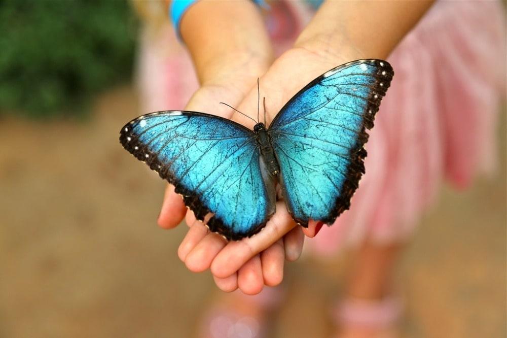 Mariposario - Schmetterlings-Park von Benalmádena