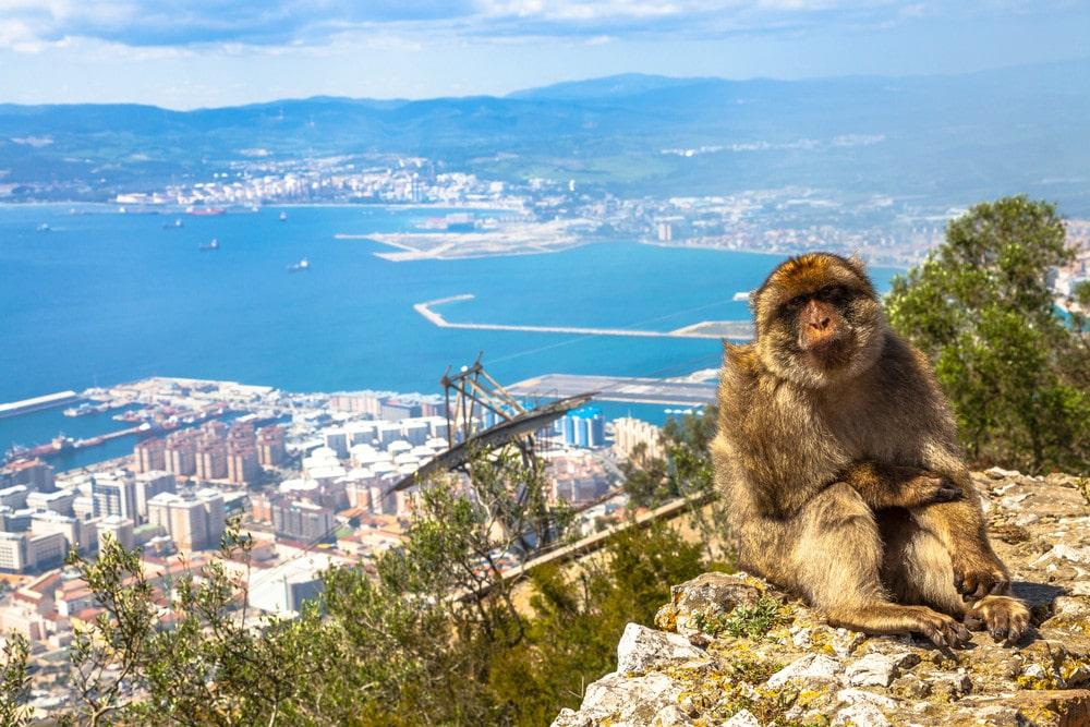Mono en la Roca de Gibraltar