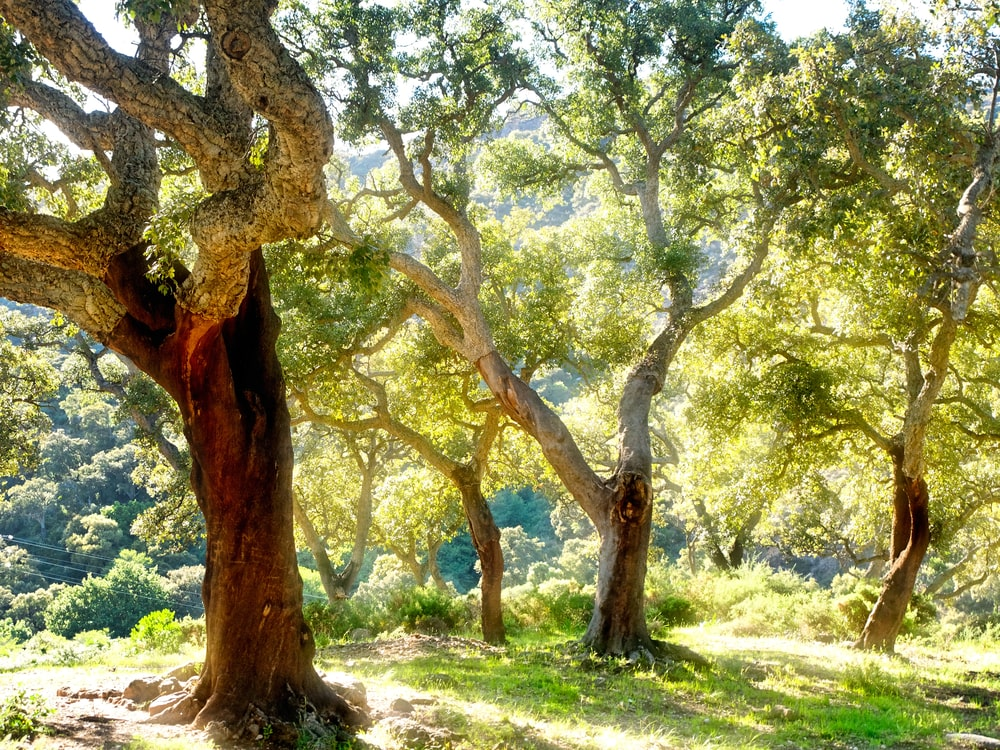 Parques naturales en la Costa de la Luz