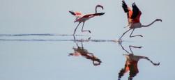 Nationalpark Doñana: die besten Touren, um seine Schönheit zu entdecken